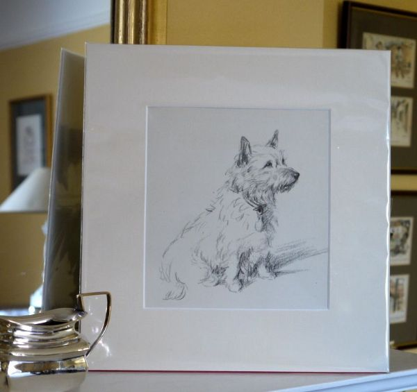 Cairn - Ca D17 - sitting 1930's print by Lucy Dawson
